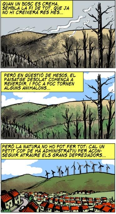 """[DIRECTA] La """"miraculosa"""" regeneració dels boscos"""